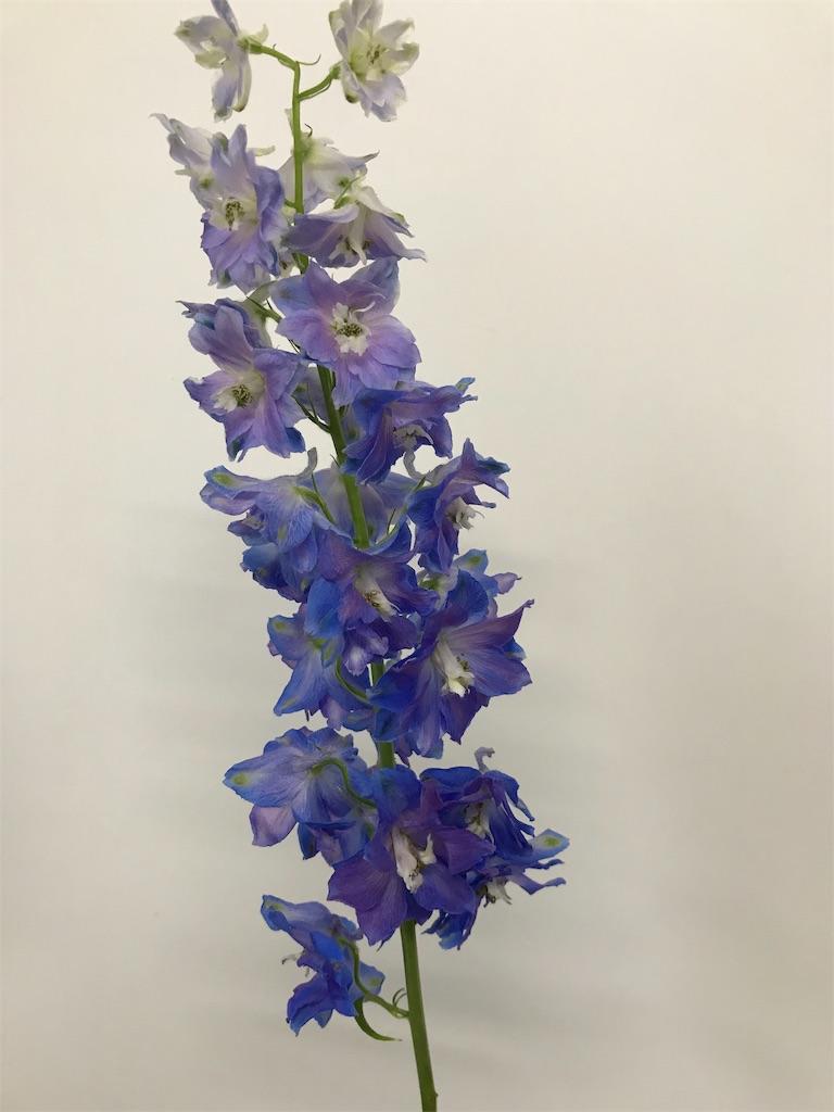f:id:asunaro-flower:20190815162723j:image