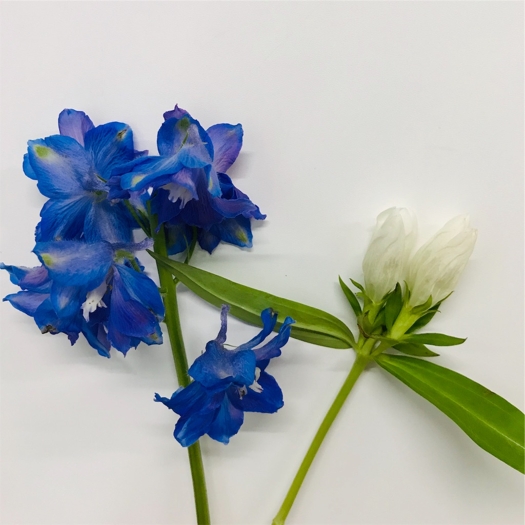 f:id:asunaro-flower:20190815163013j:image