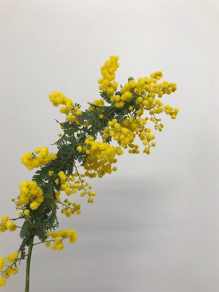 f:id:asunaro-flower:20190820122640j:image