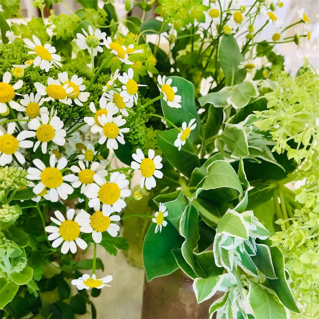 f:id:asunaro-flower:20190820123352j:image