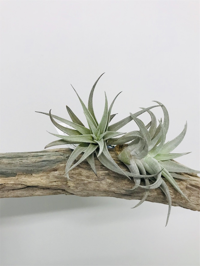 f:id:asunaro-flower:20190824194504j:image