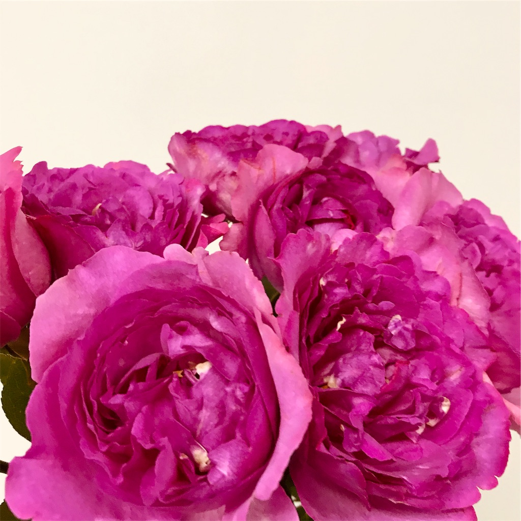 f:id:asunaro-flower:20190828140519j:image