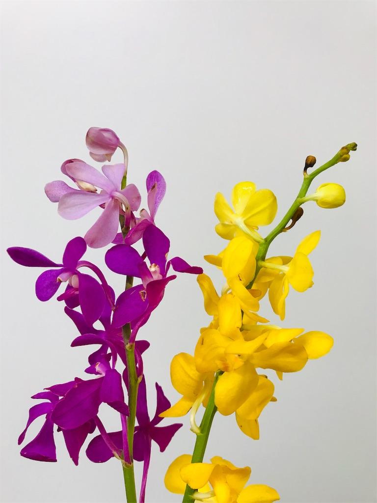 f:id:asunaro-flower:20190828140854j:image