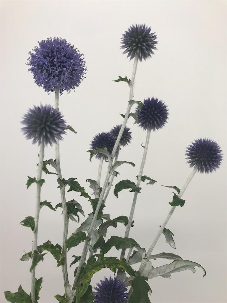 f:id:asunaro-flower:20190828182548j:image