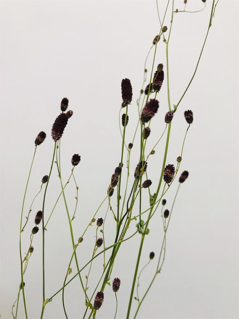 f:id:asunaro-flower:20190911210438j:image