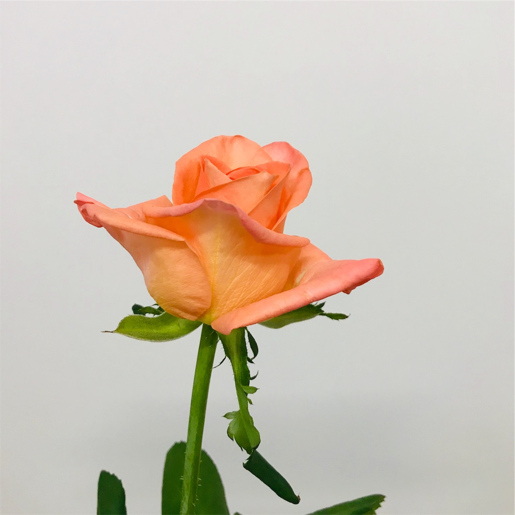 f:id:asunaro-flower:20190925195133j:image