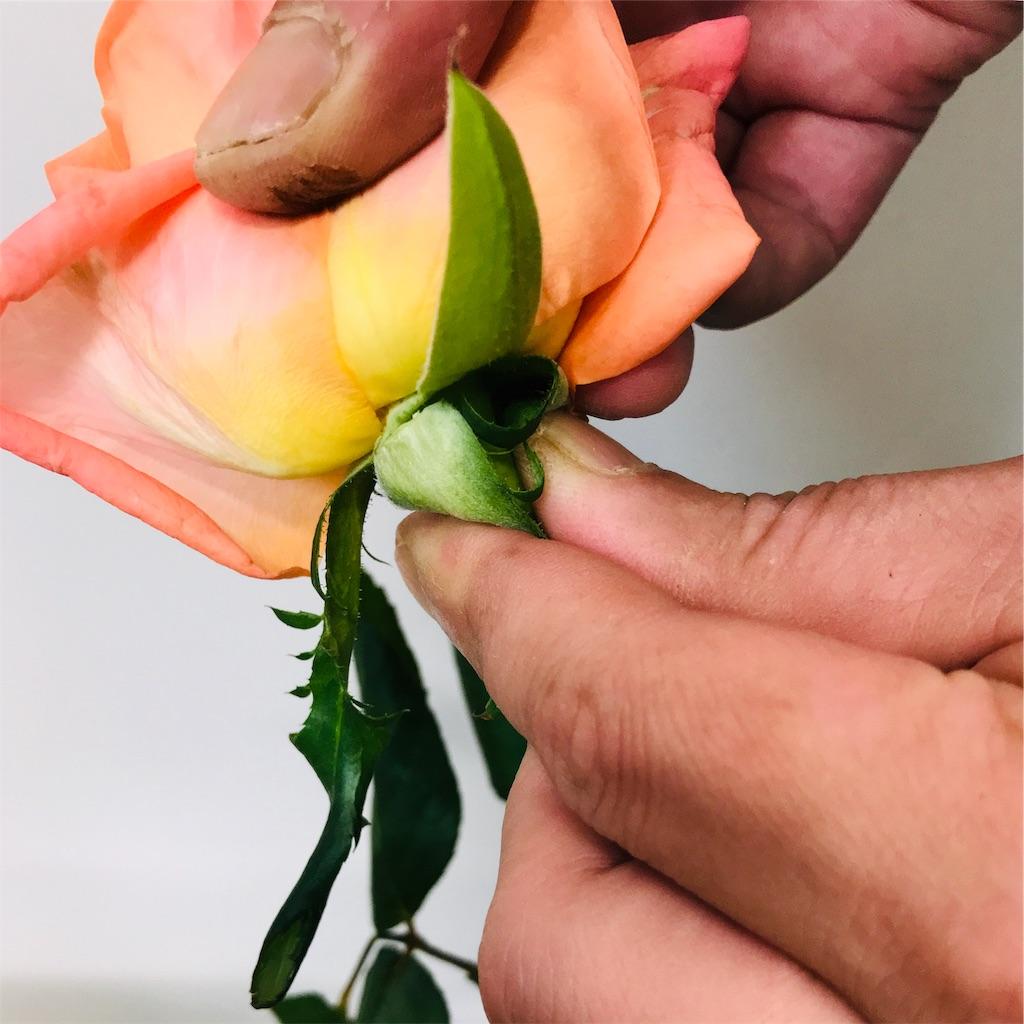 f:id:asunaro-flower:20190925200210j:image