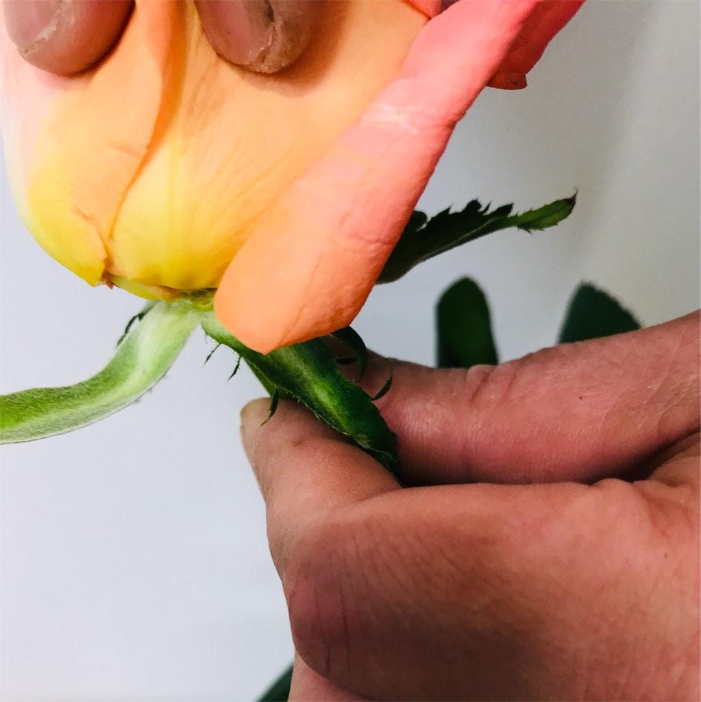 f:id:asunaro-flower:20190925200230j:image