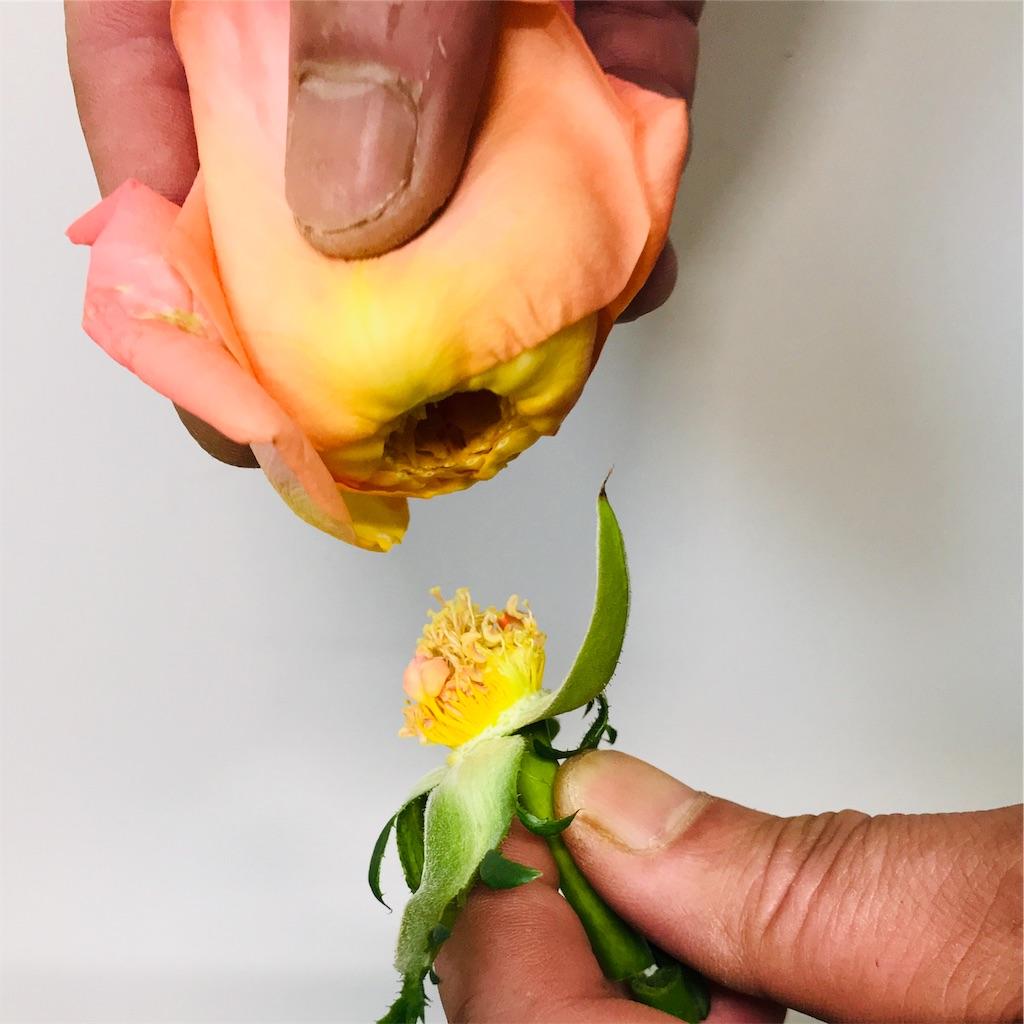 f:id:asunaro-flower:20190925200442j:image