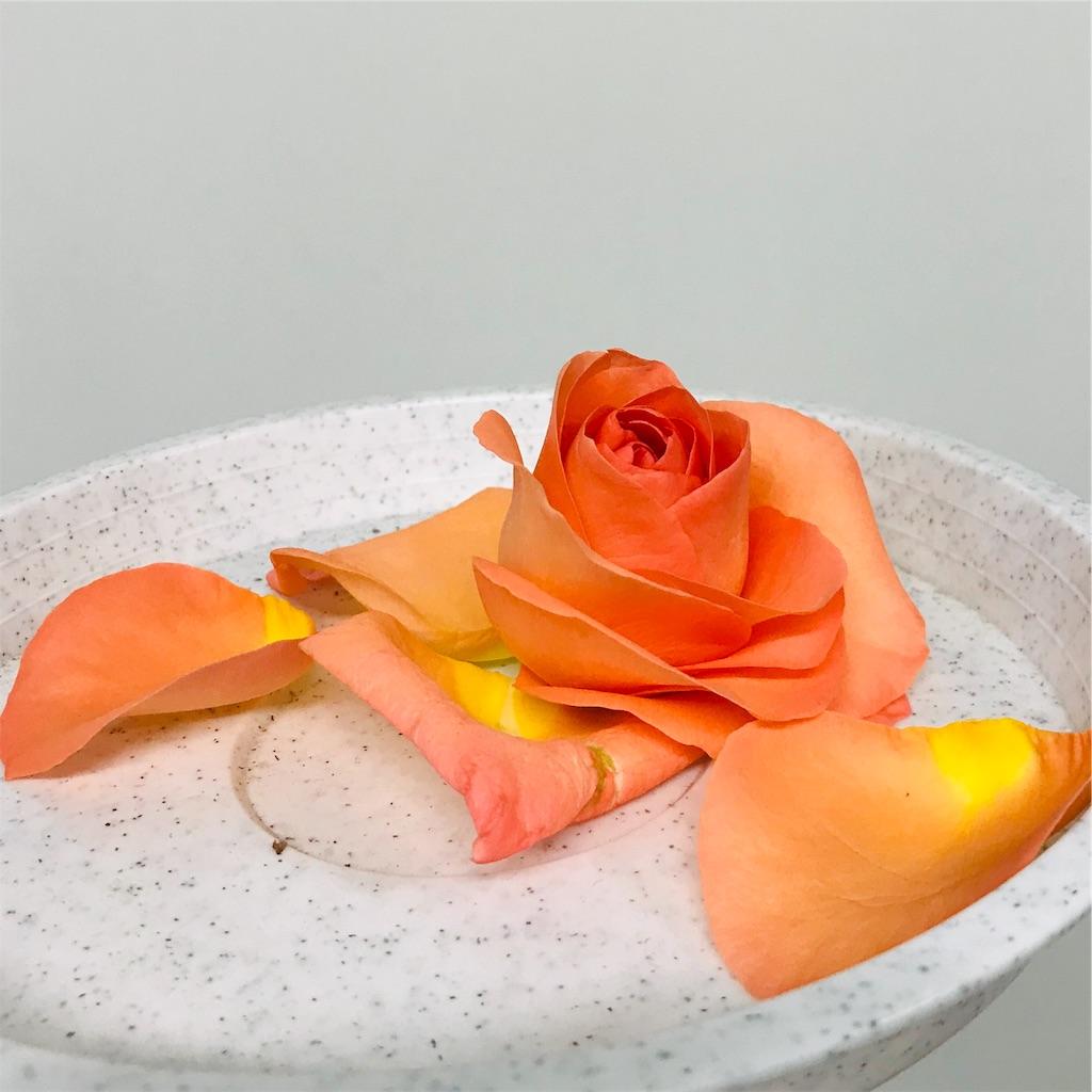 f:id:asunaro-flower:20190925200927j:image