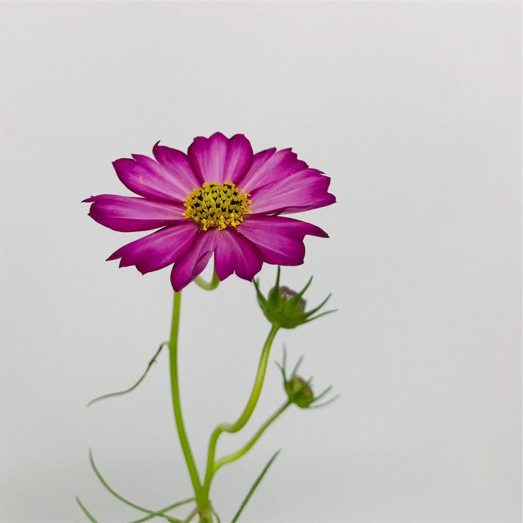 f:id:asunaro-flower:20190928231111j:image