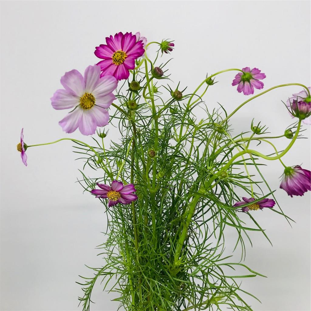 f:id:asunaro-flower:20190928232115j:image
