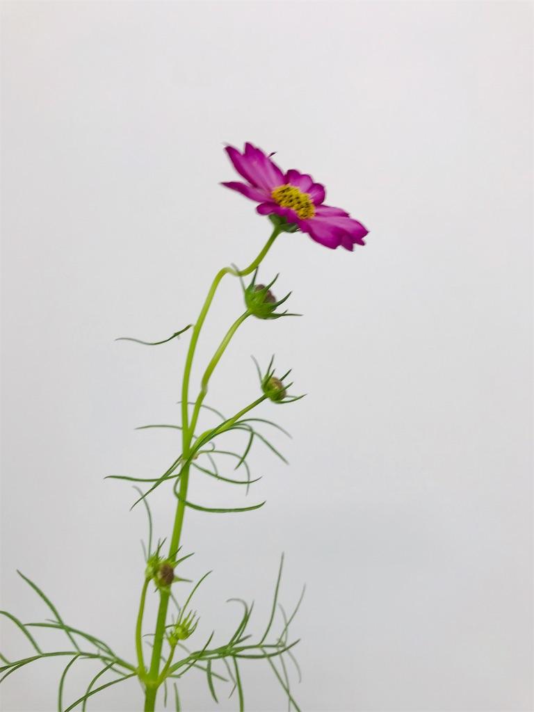 f:id:asunaro-flower:20190929000601j:image