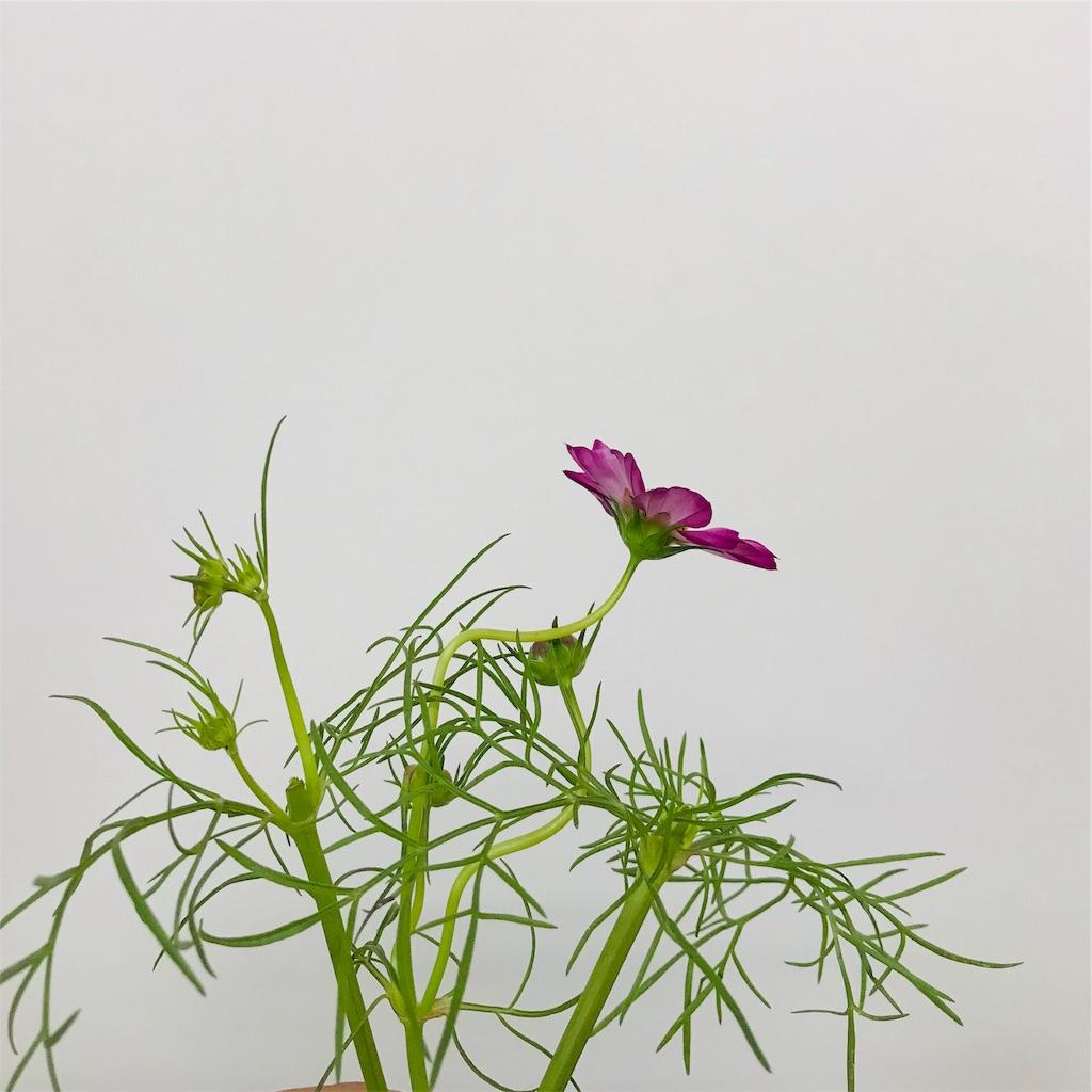f:id:asunaro-flower:20190929001043j:image