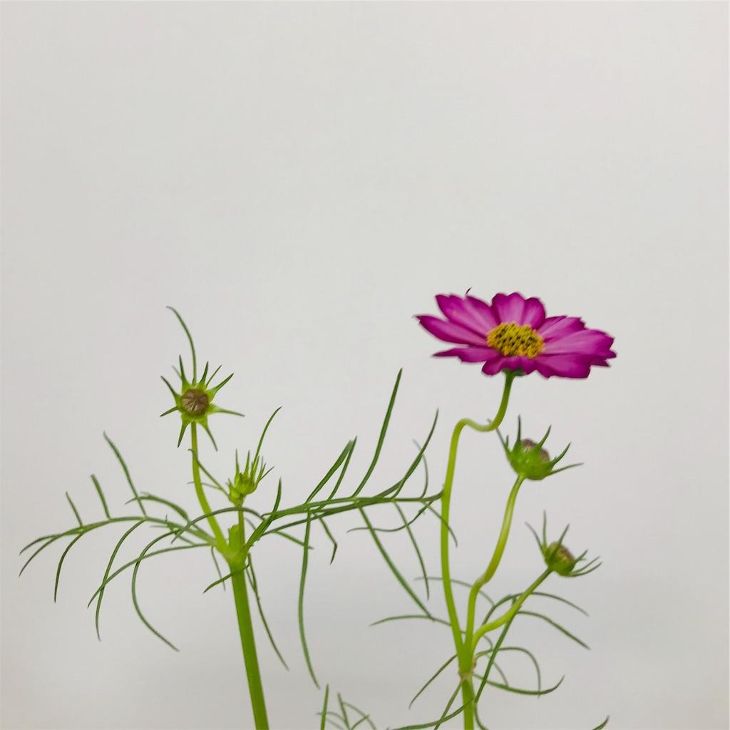 f:id:asunaro-flower:20190929001102j:image