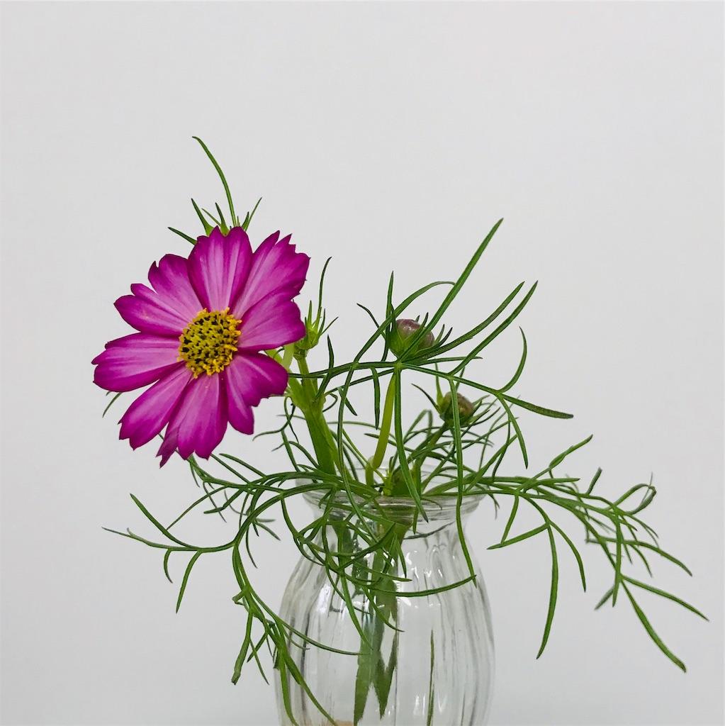 f:id:asunaro-flower:20190929001258j:image