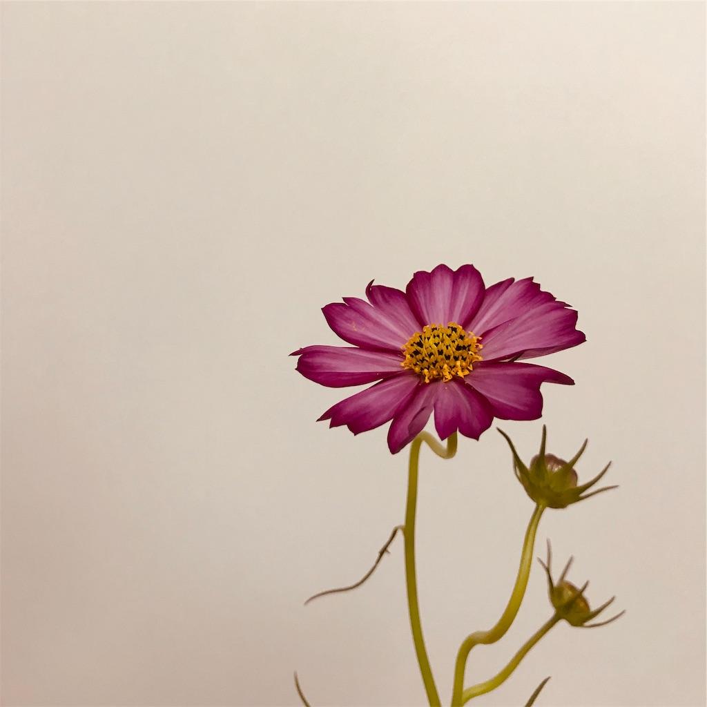 f:id:asunaro-flower:20190929002844j:image