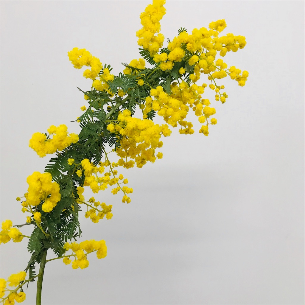 f:id:asunaro-flower:20191006203247j:image