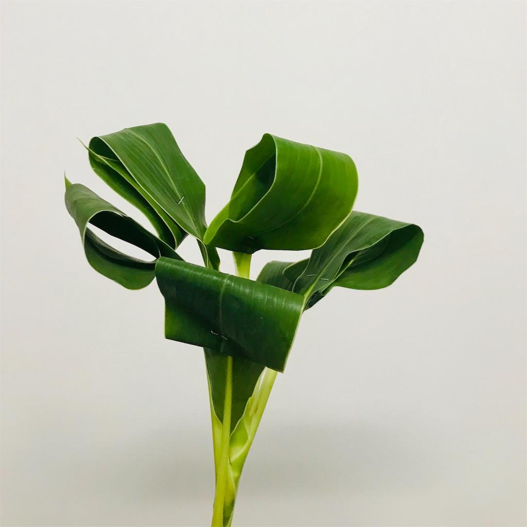 f:id:asunaro-flower:20191011002045j:image