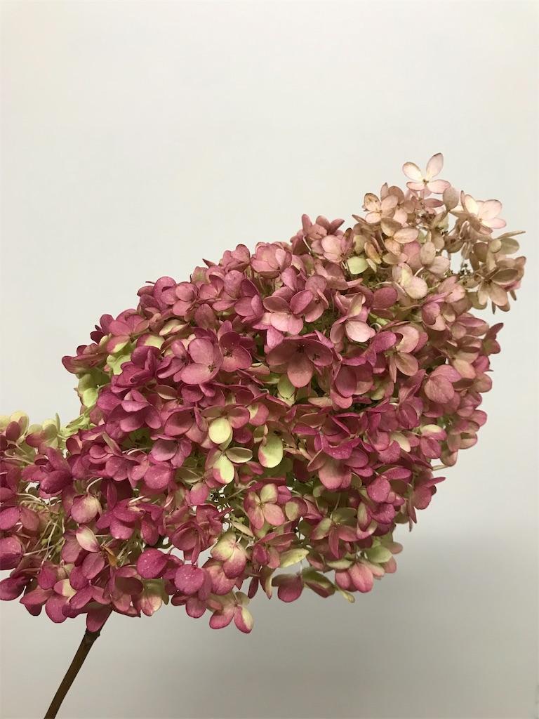 f:id:asunaro-flower:20191015144520j:image