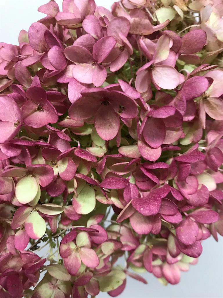 f:id:asunaro-flower:20191015155234j:image