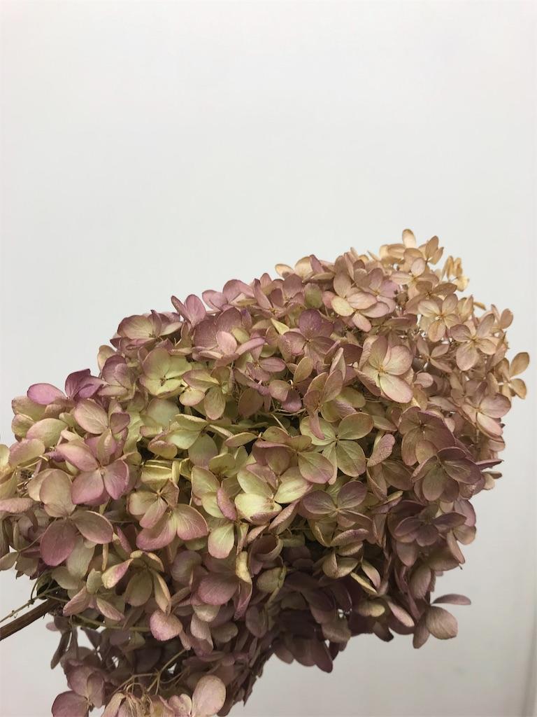 f:id:asunaro-flower:20191015155630j:image