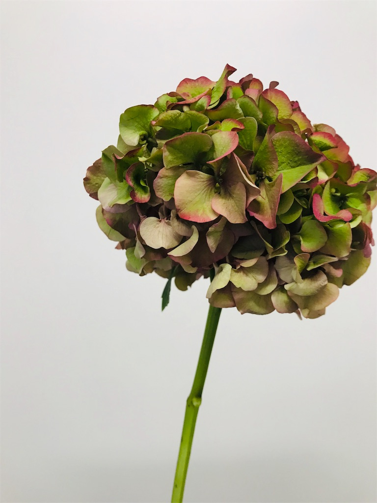 f:id:asunaro-flower:20191015160757j:image