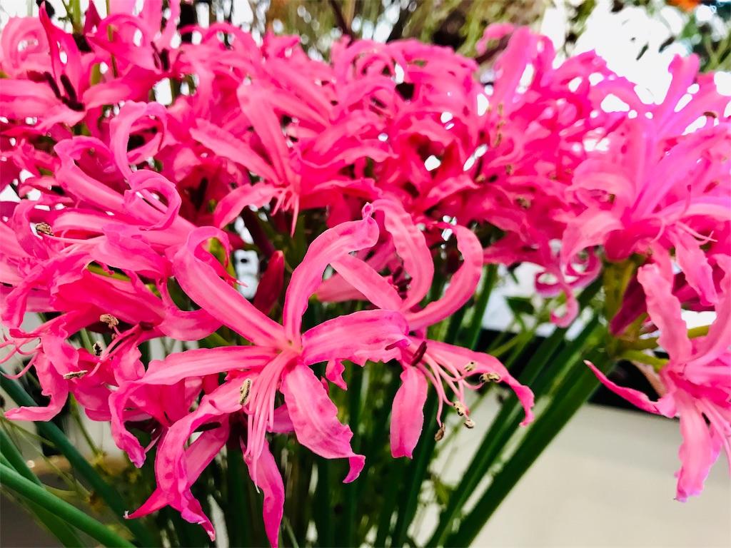f:id:asunaro-flower:20191023001759j:image