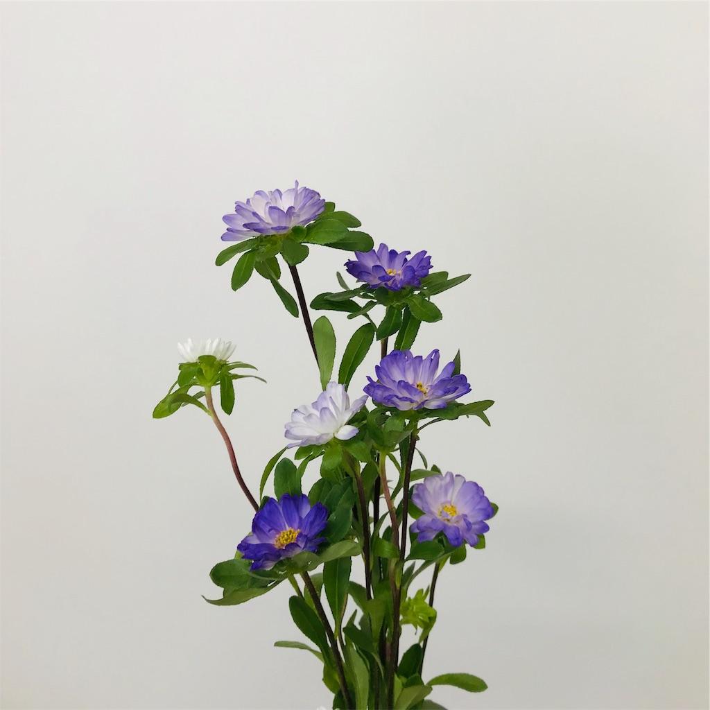 f:id:asunaro-flower:20191029165947j:image