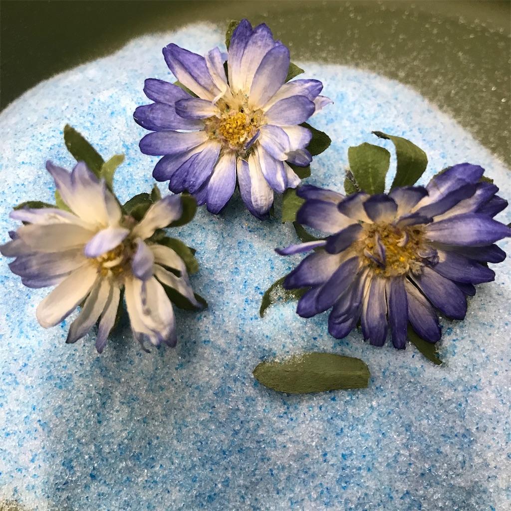 f:id:asunaro-flower:20191029175750j:image