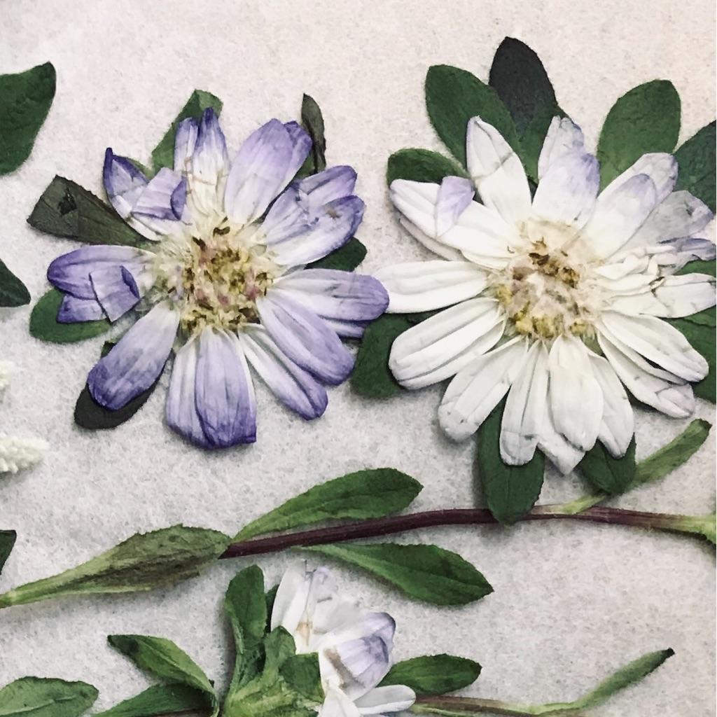 f:id:asunaro-flower:20191030002748j:image