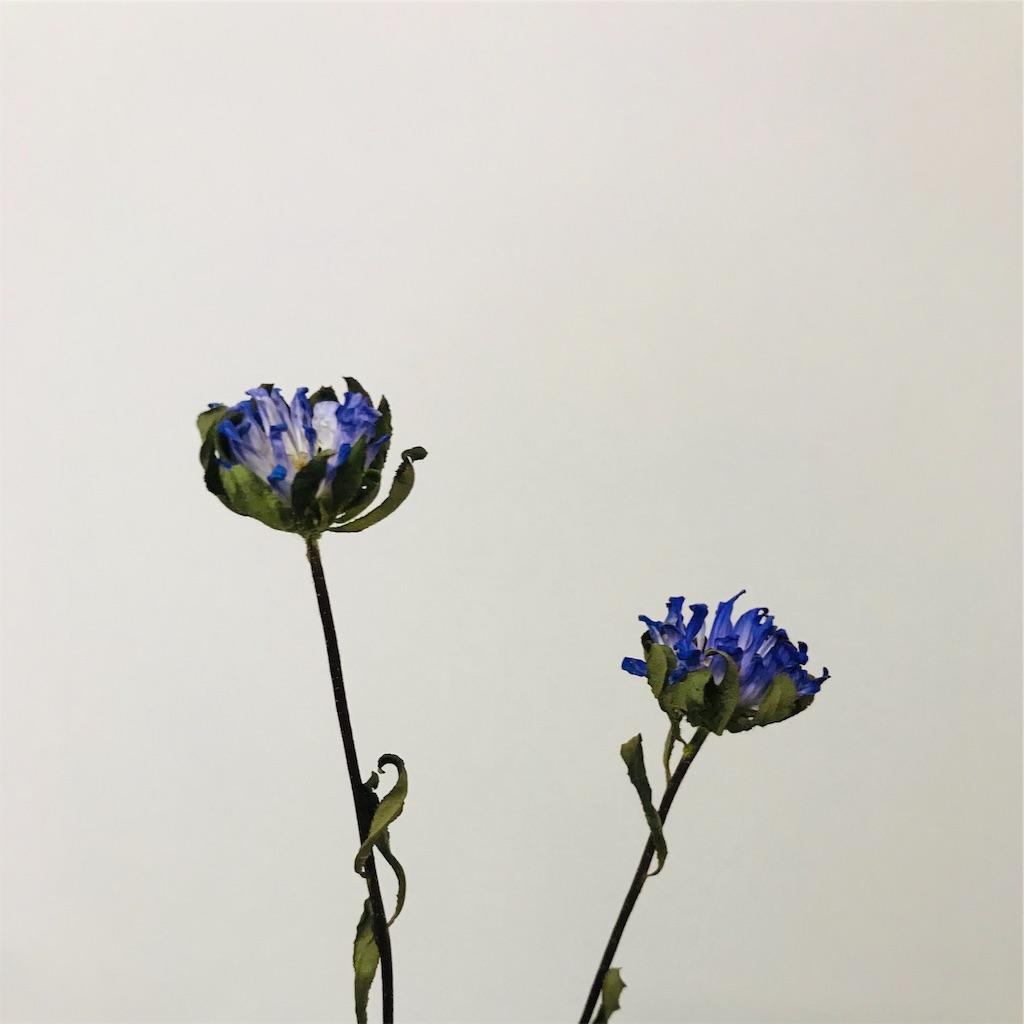 f:id:asunaro-flower:20191030020041j:image