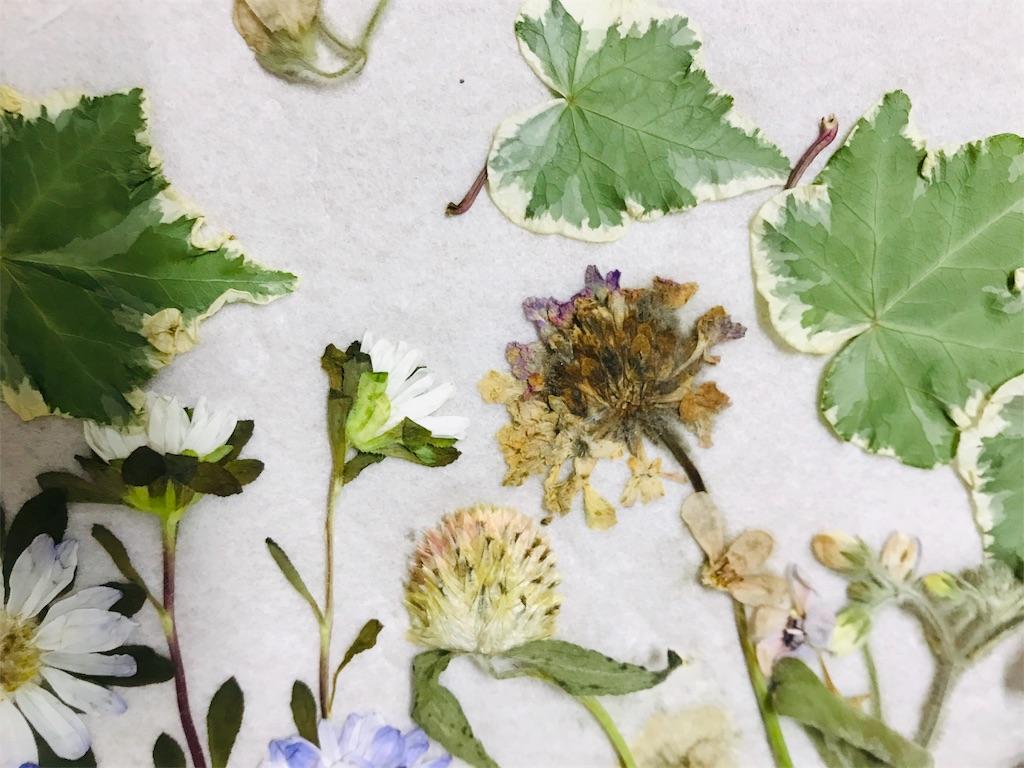 f:id:asunaro-flower:20191103235635j:image