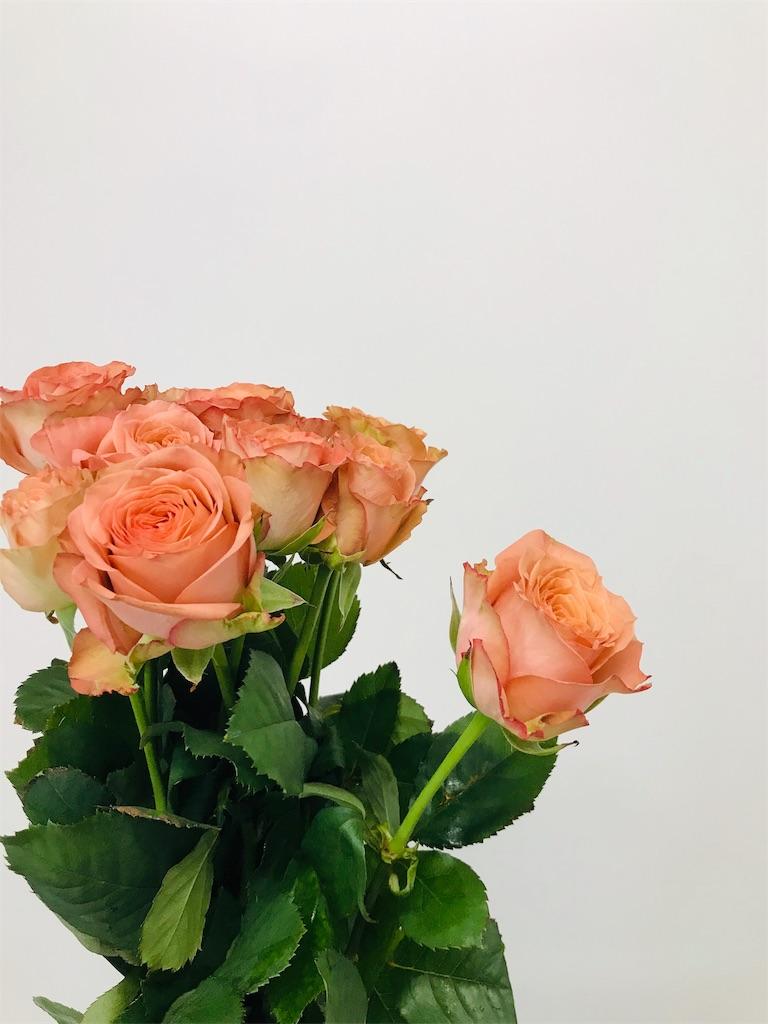 f:id:asunaro-flower:20191114141830j:image