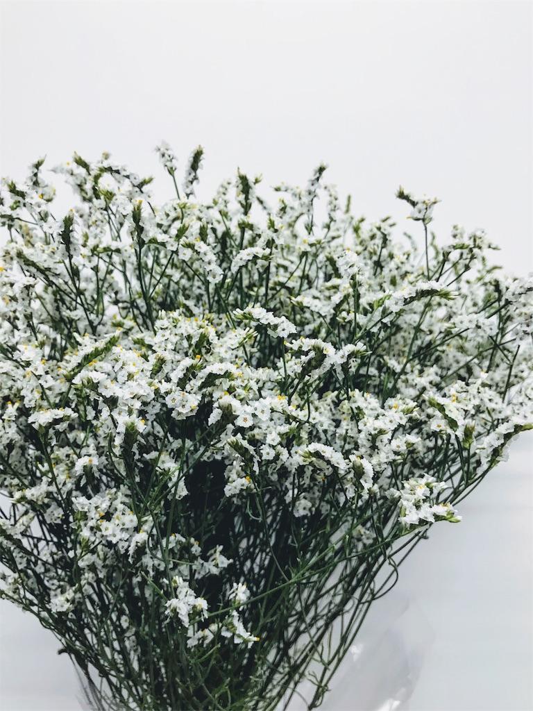 f:id:asunaro-flower:20191118000525j:image