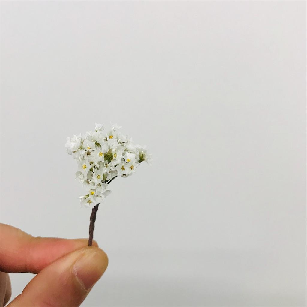 f:id:asunaro-flower:20191118002351j:image