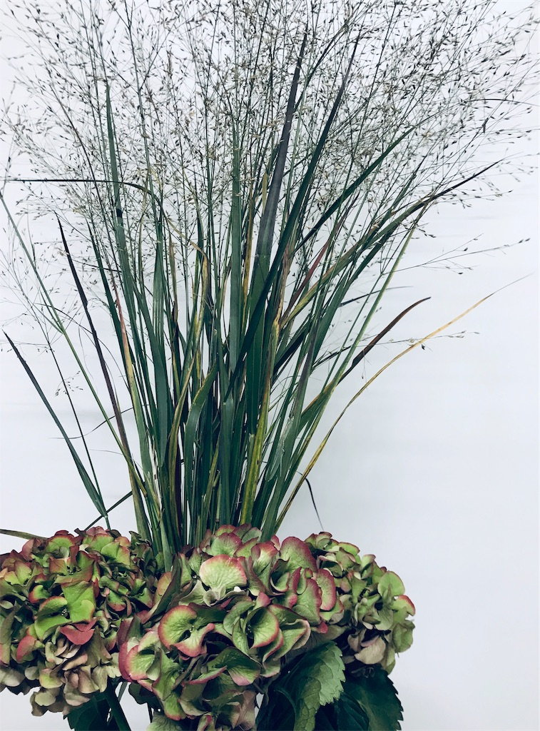 f:id:asunaro-flower:20191128234738j:image