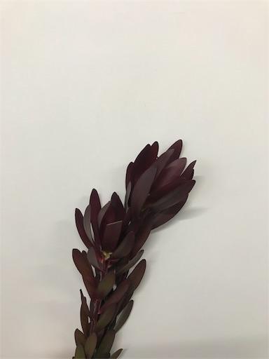 f:id:asunaro-flower:20191209234948j:image