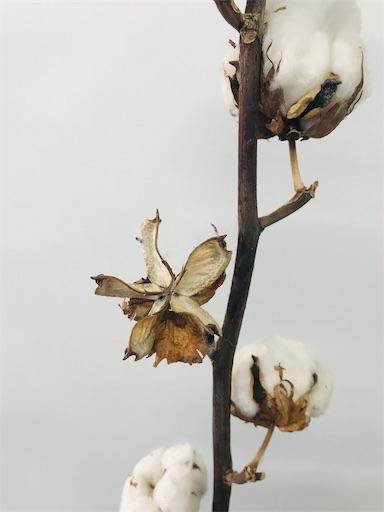 f:id:asunaro-flower:20191213010925j:image