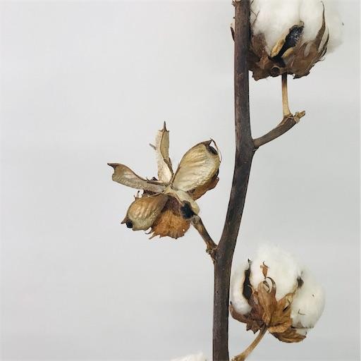 f:id:asunaro-flower:20191213010927j:image