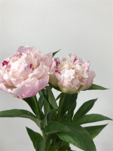 f:id:asunaro-flower:20191218010117j:image