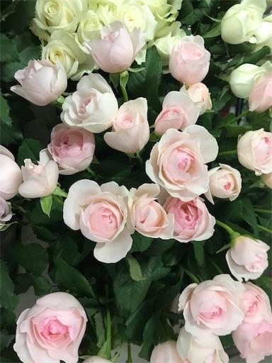 f:id:asunaro-flower:20191218010904j:image