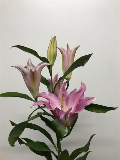 f:id:asunaro-flower:20191218010907j:image