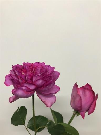 f:id:asunaro-flower:20191218010911j:image