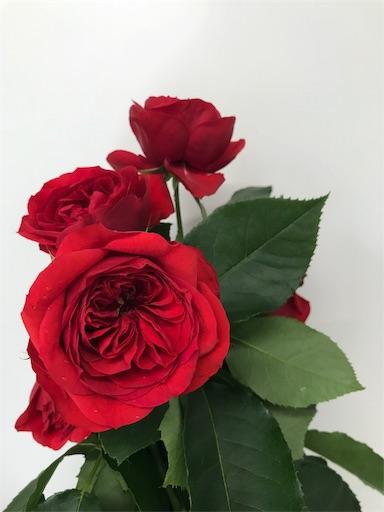 f:id:asunaro-flower:20191218015933j:image