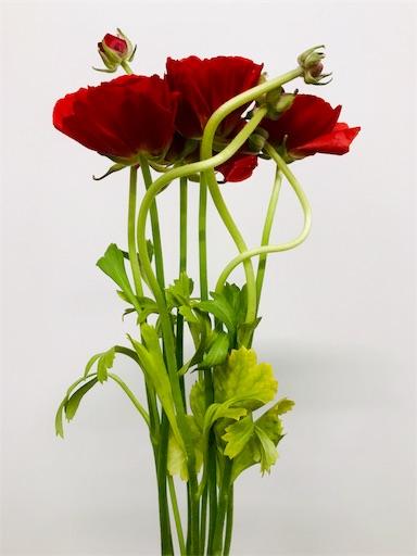 f:id:asunaro-flower:20191219143311j:image