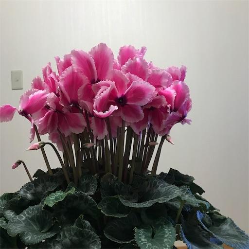 f:id:asunaro-flower:20191224002655j:image