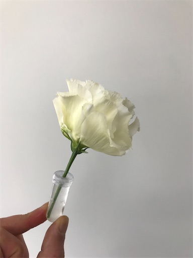 f:id:asunaro-flower:20200111105231j:image