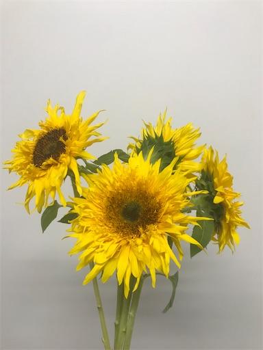 f:id:asunaro-flower:20200128140742j:image