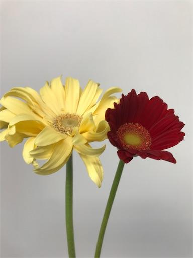 f:id:asunaro-flower:20200128140744j:image